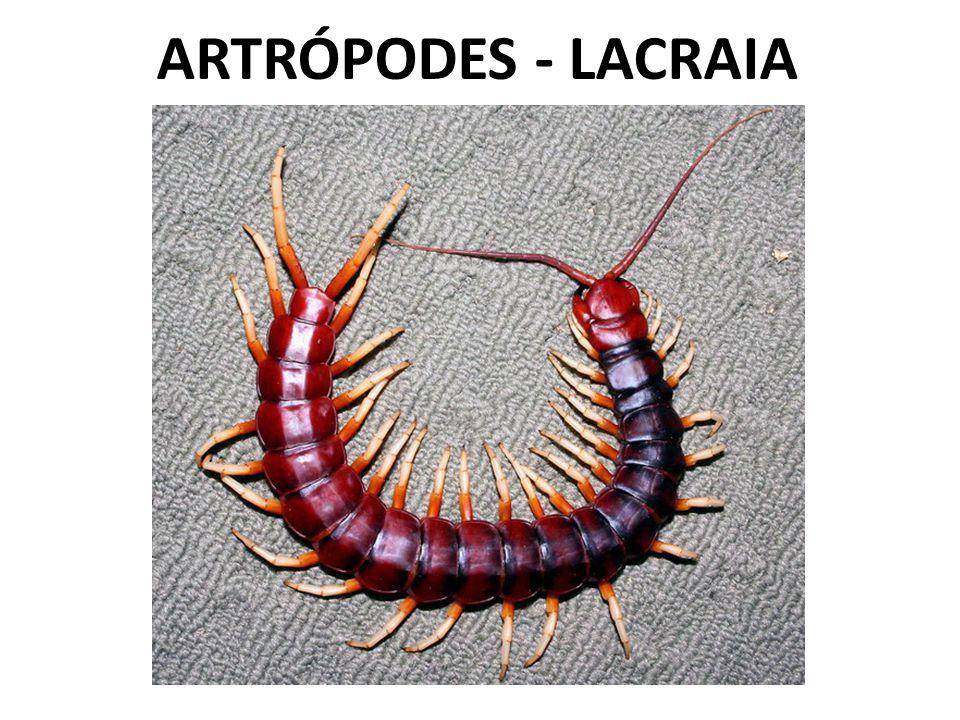 ARTRÓPODES - LACRAIA