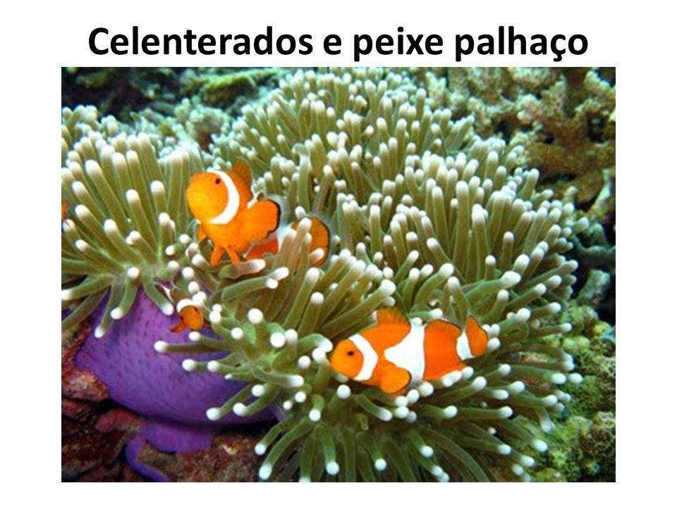 Celenterados e peixe palhaço