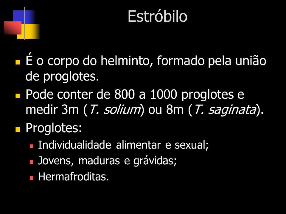 Estróbilo É o corpo do helminto, formado pela união de proglotes.