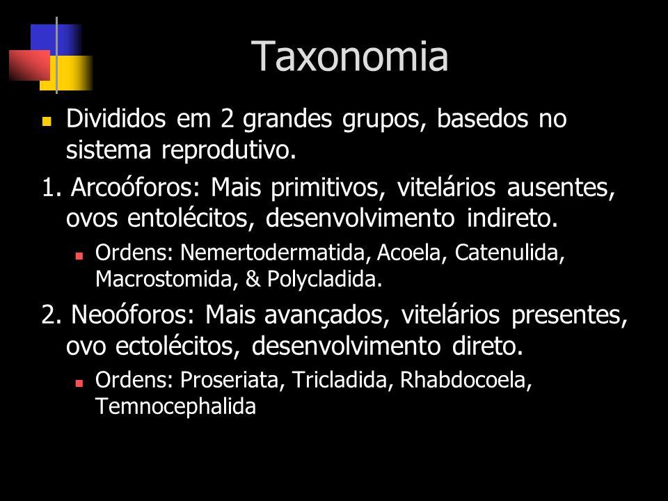 Taxonomia Divididos em 2 grandes grupos, basedos no sistema reprodutivo.