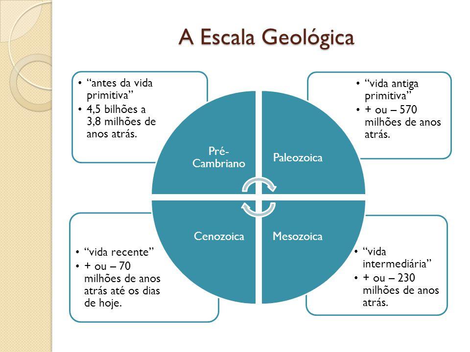 A Escala Geológica vida intermediária