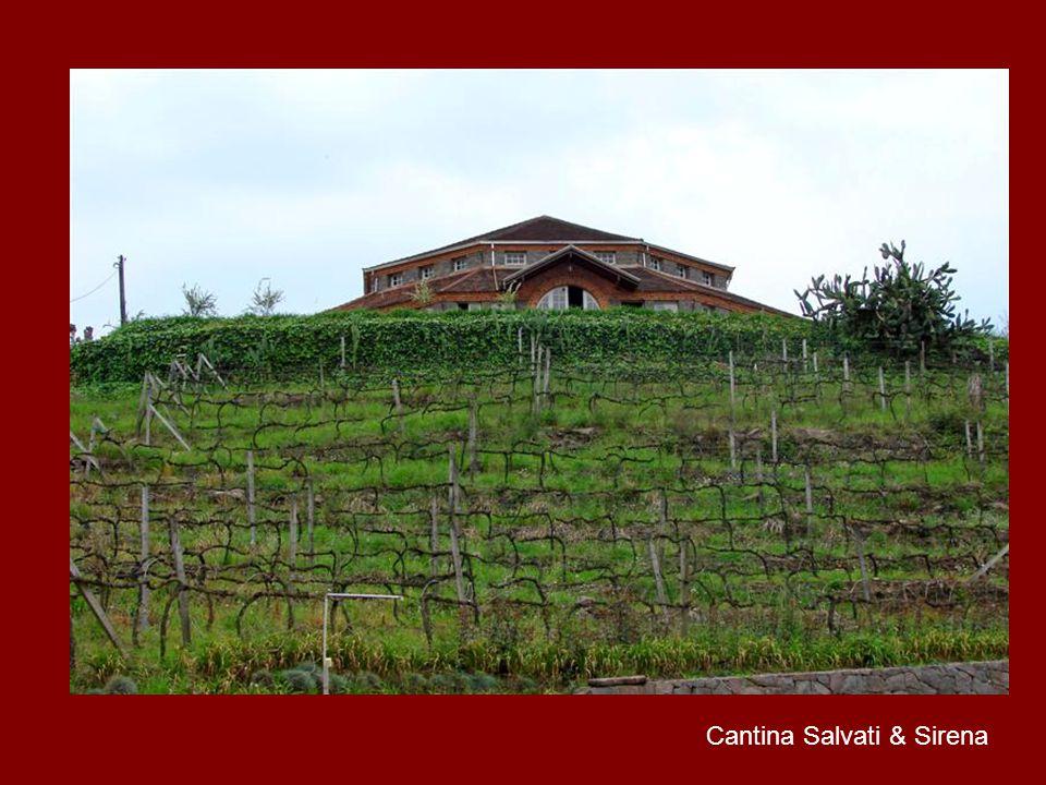 Cantina Salvati & Sirena