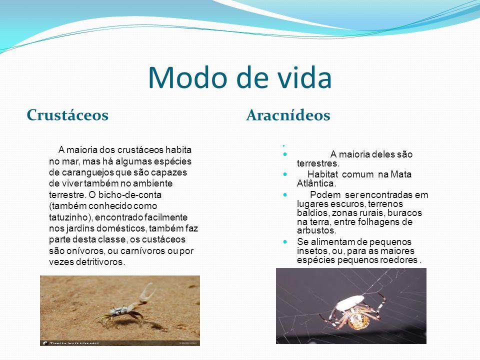 Modo de vida Crustáceos Aracnídeos