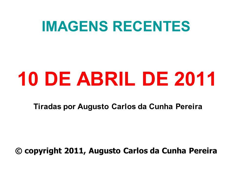 10 DE ABRIL DE 2011 IMAGENS RECENTES