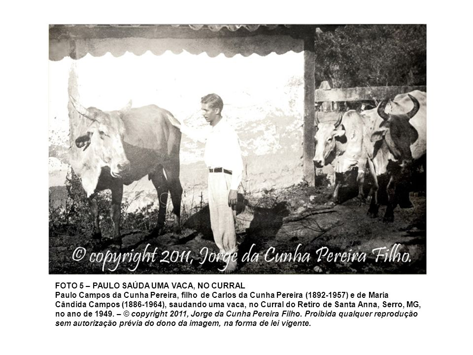 FOTO 5 – PAULO SAÚDA UMA VACA, NO CURRAL