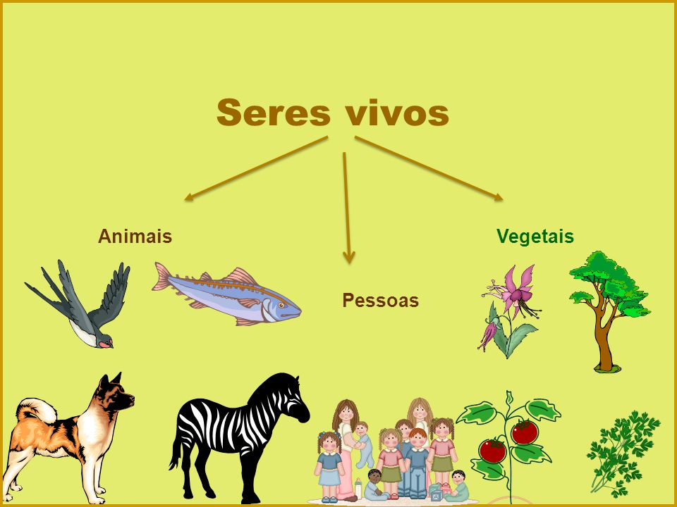 Seres vivos Animais Vegetais Pessoas