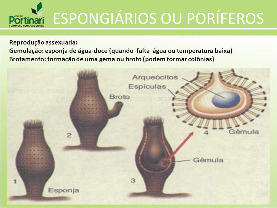 ESPONGIÁRIOS OU PORÍFEROS