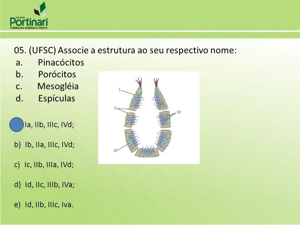 a. Pinacócitos b. Porócitos c. Mesogléia d. Espículas