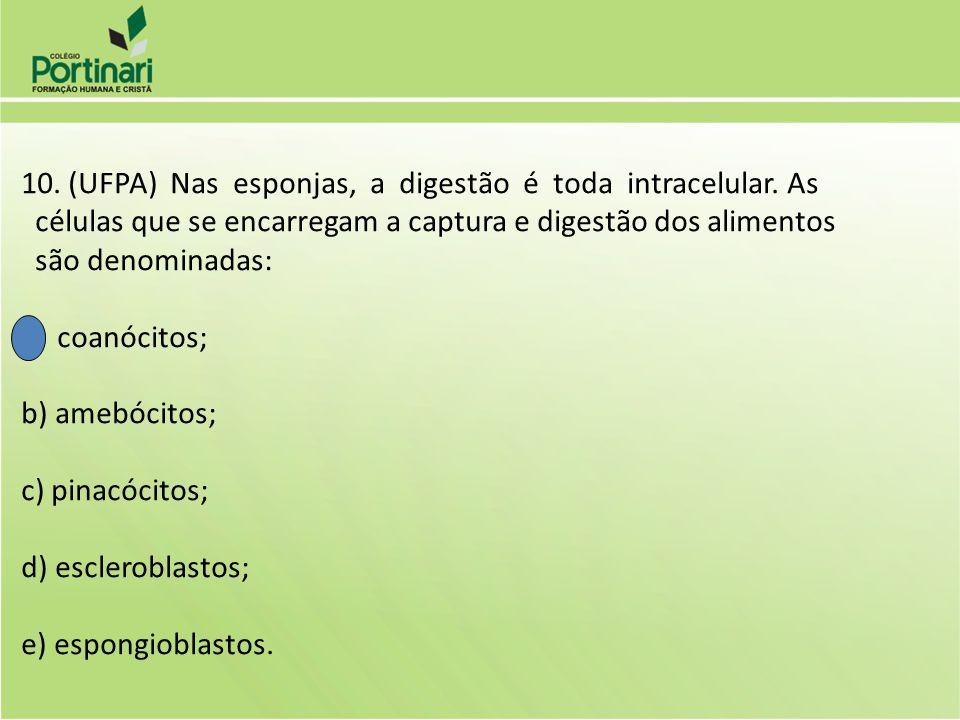 10. (UFPA) Nas esponjas, a digestão é toda intracelular. As