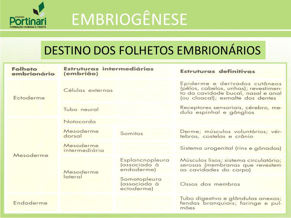EMBRIOGÊNESE DESTINO DOS FOLHETOS EMBRIONÁRIOS