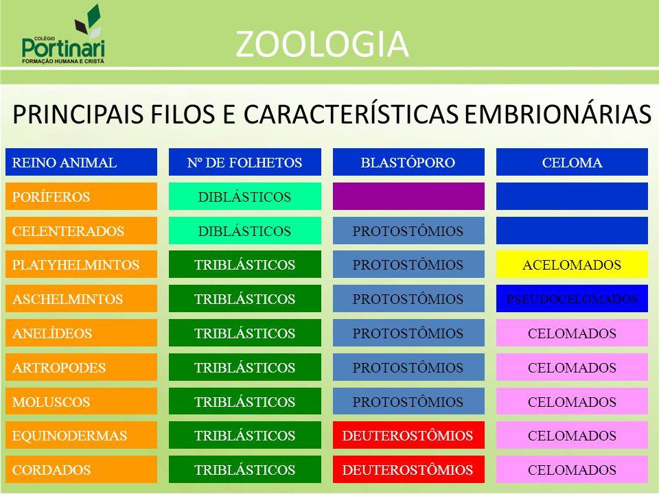 ZOOLOGIA PRINCIPAIS FILOS E CARACTERÍSTICAS EMBRIONÁRIAS REINO ANIMAL