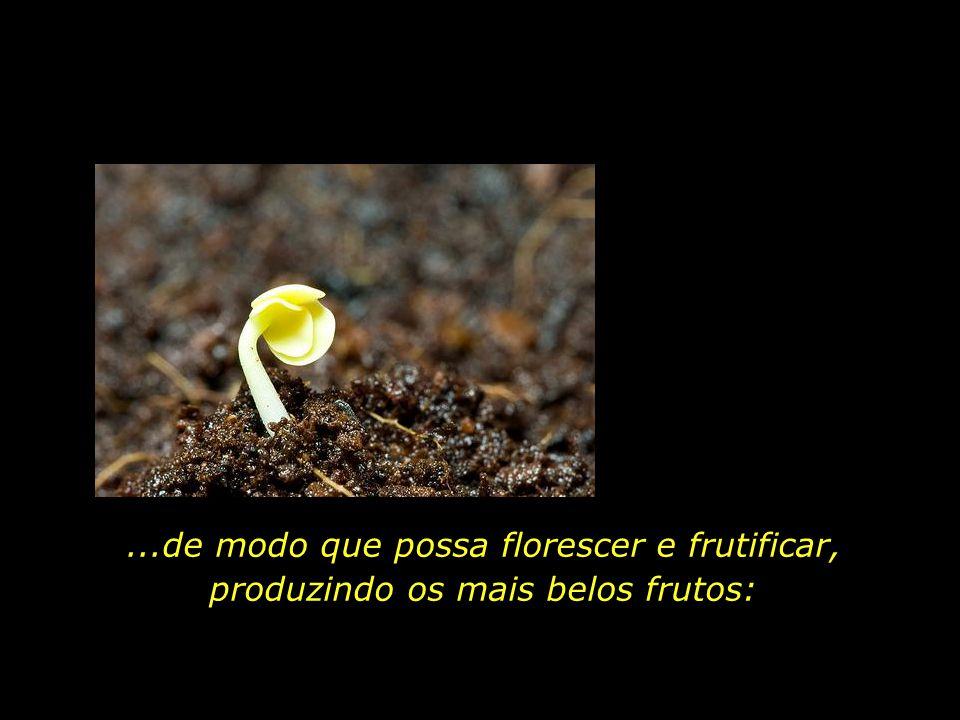...de modo que possa florescer e frutificar, produzindo os mais belos frutos: