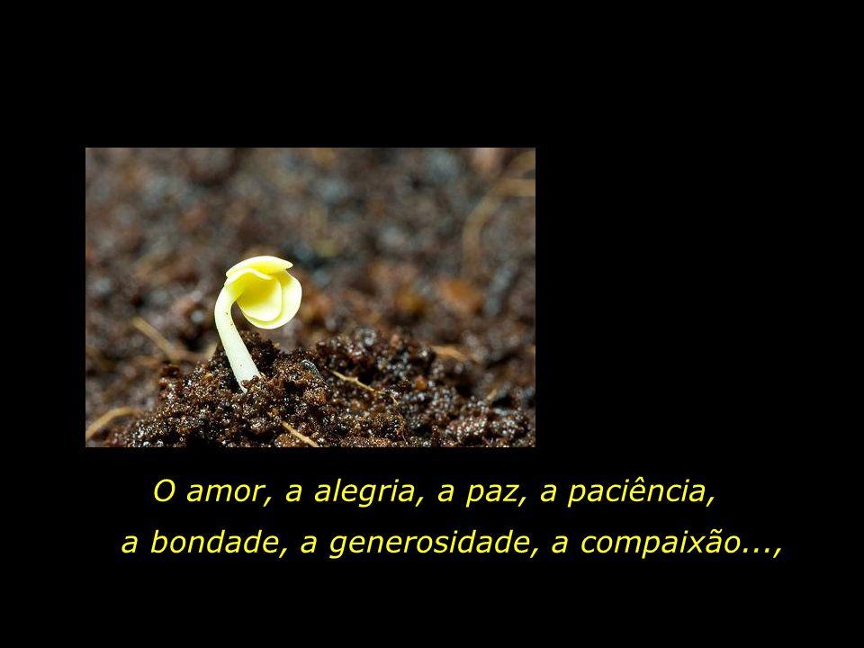 O amor, a alegria, a paz, a paciência,