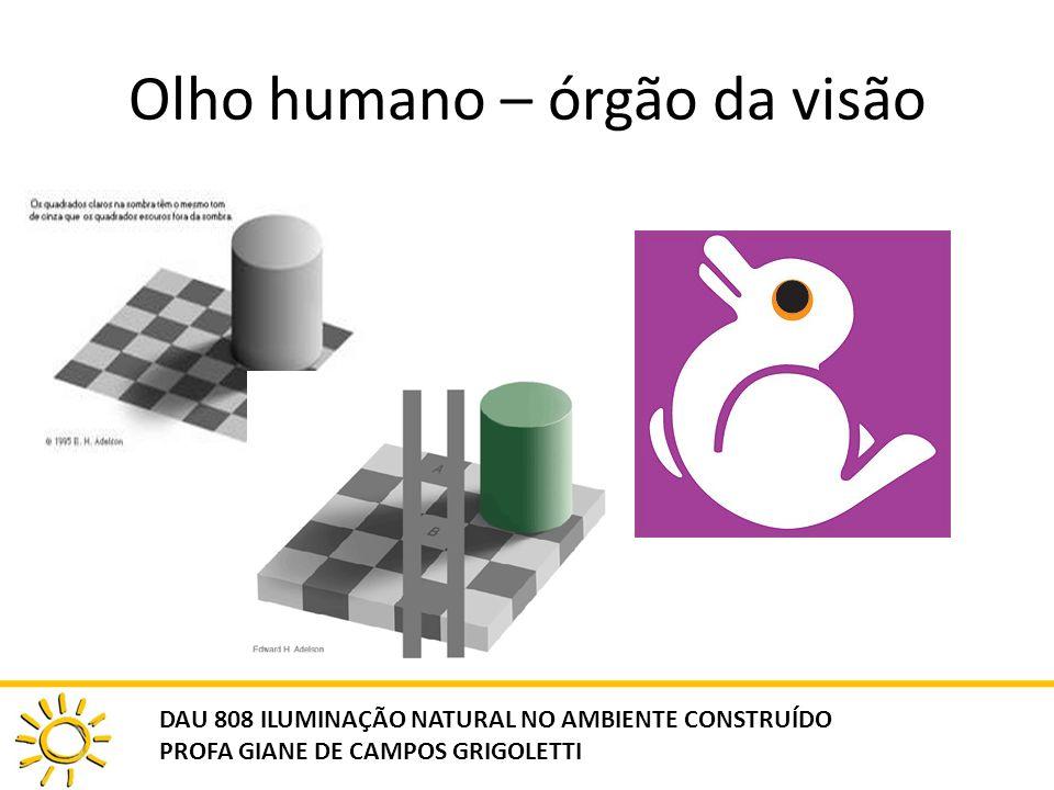 Olho humano – órgão da visão