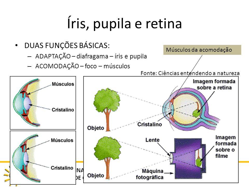 Íris, pupila e retina DUAS FUNÇÕES BÁSICAS: