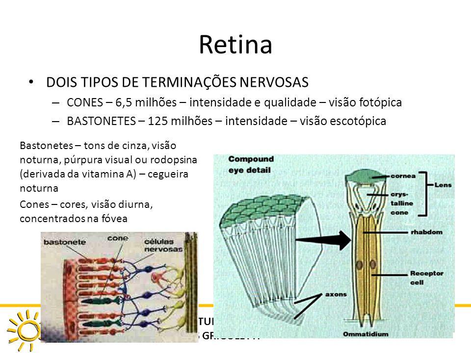 Retina DOIS TIPOS DE TERMINAÇÕES NERVOSAS