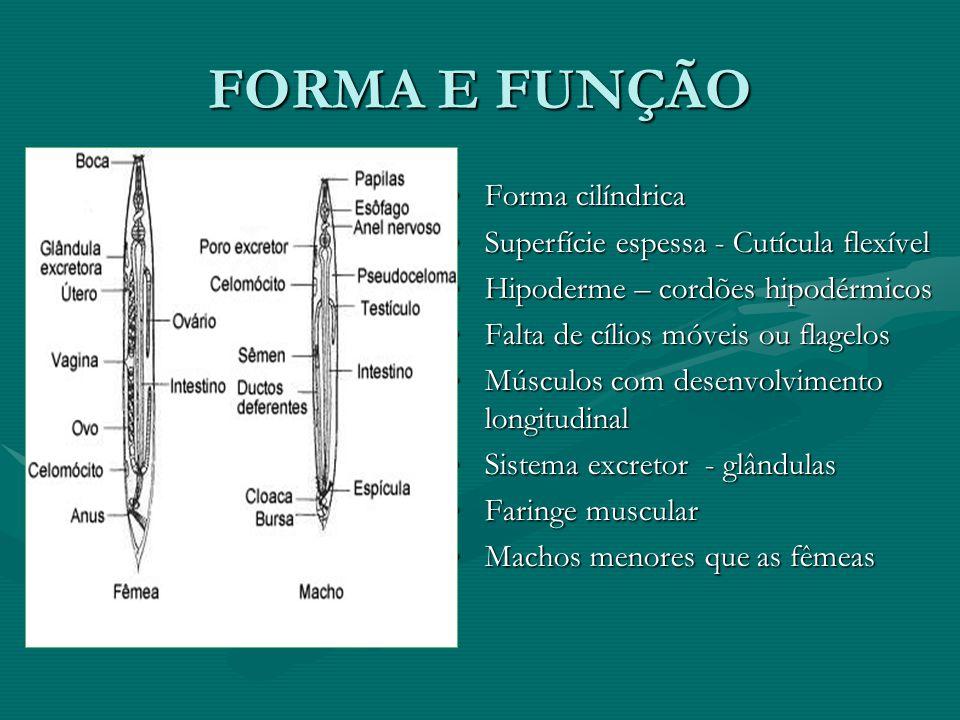 FORMA E FUNÇÃO Forma cilíndrica Superfície espessa - Cutícula flexível