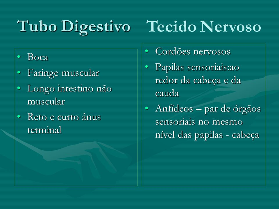 Tubo Digestivo Tecido Nervoso Cordões nervosos Boca