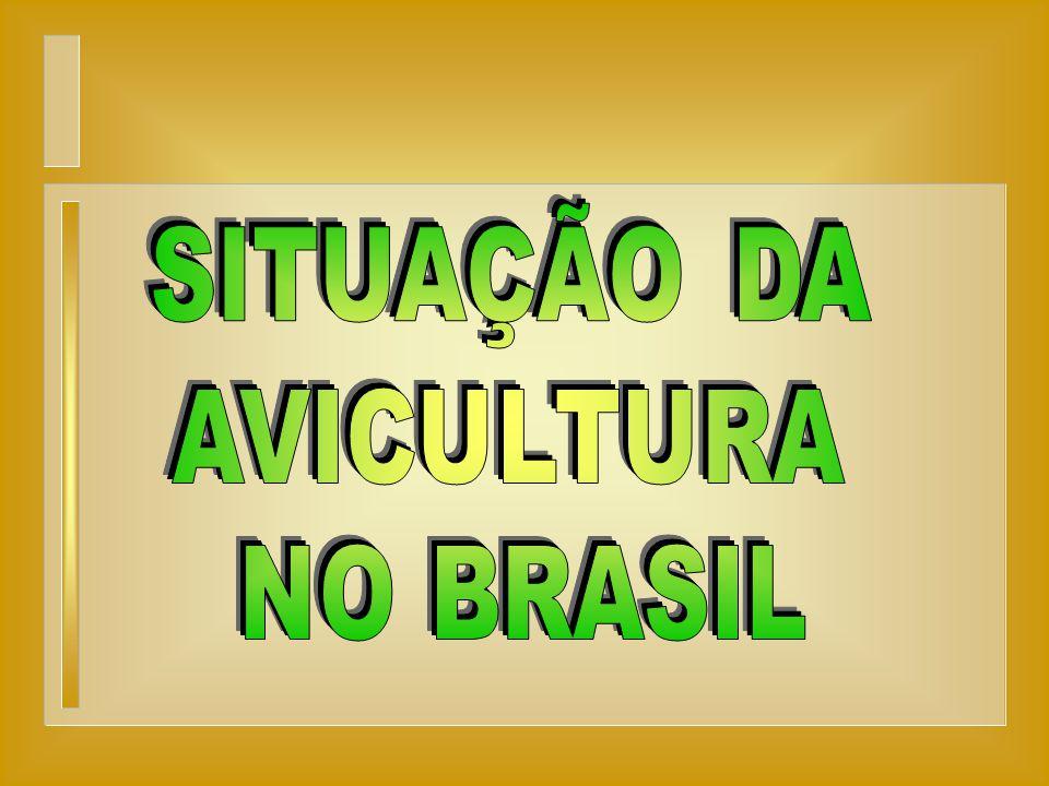 SITUAÇÃO DA AVICULTURA NO BRASIL