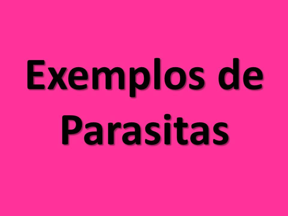 Exemplos de Parasitas