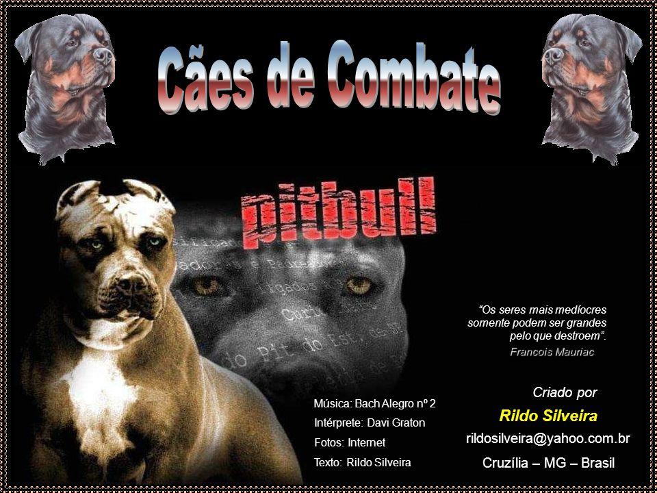 Cães de Combate Rildo Silveira Criado por rildosilveira@yahoo.com.br