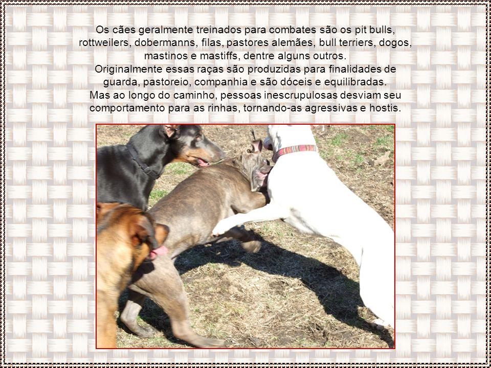 Os cães geralmente treinados para combates são os pit bulls, rottweilers, dobermanns, filas, pastores alemães, bull terriers, dogos, mastinos e mastiffs, dentre alguns outros.