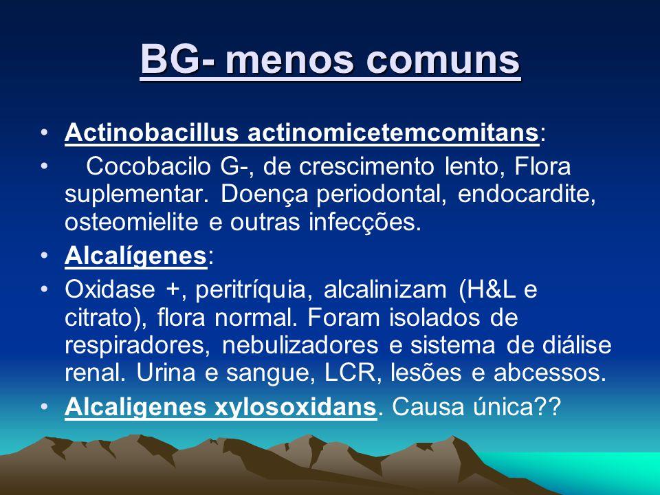 BG- menos comuns Actinobacillus actinomicetemcomitans: