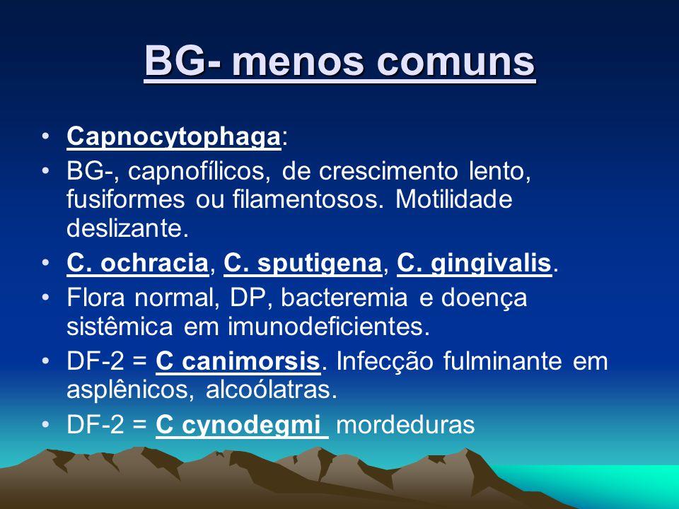 BG- menos comuns Capnocytophaga:
