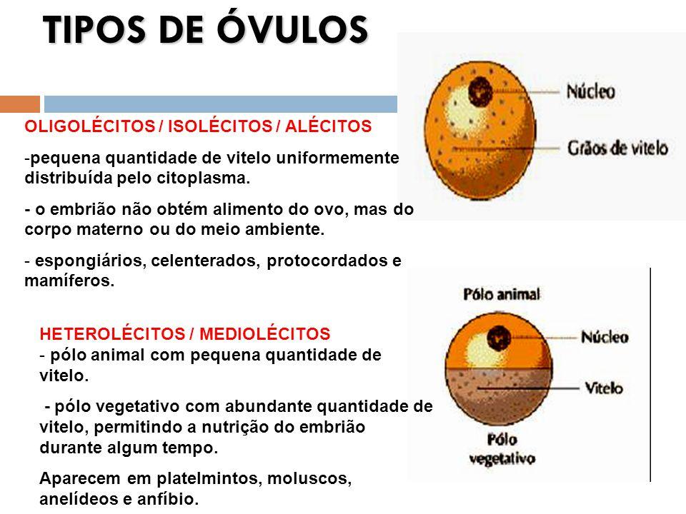 TIPOS DE ÓVULOS OLIGOLÉCITOS / ISOLÉCITOS / ALÉCITOS