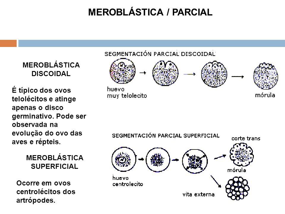 MEROBLÁSTICA / PARCIAL