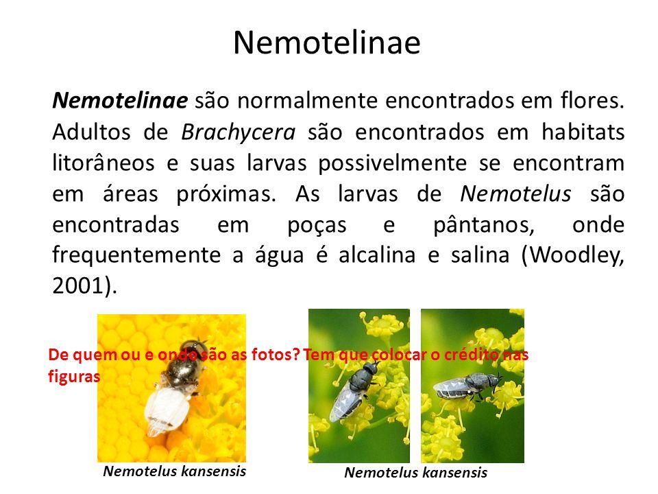 Nemotelinae
