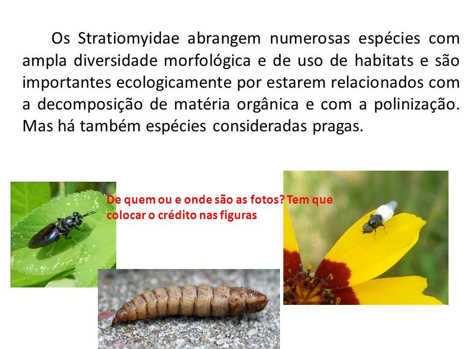 Os Stratiomyidae abrangem numerosas espécies com ampla diversidade morfológica e de uso de habitats e são importantes ecologicamente por estarem relacionados com a decomposição de matéria orgânica e com a polinização. Mas há também espécies consideradas pragas.