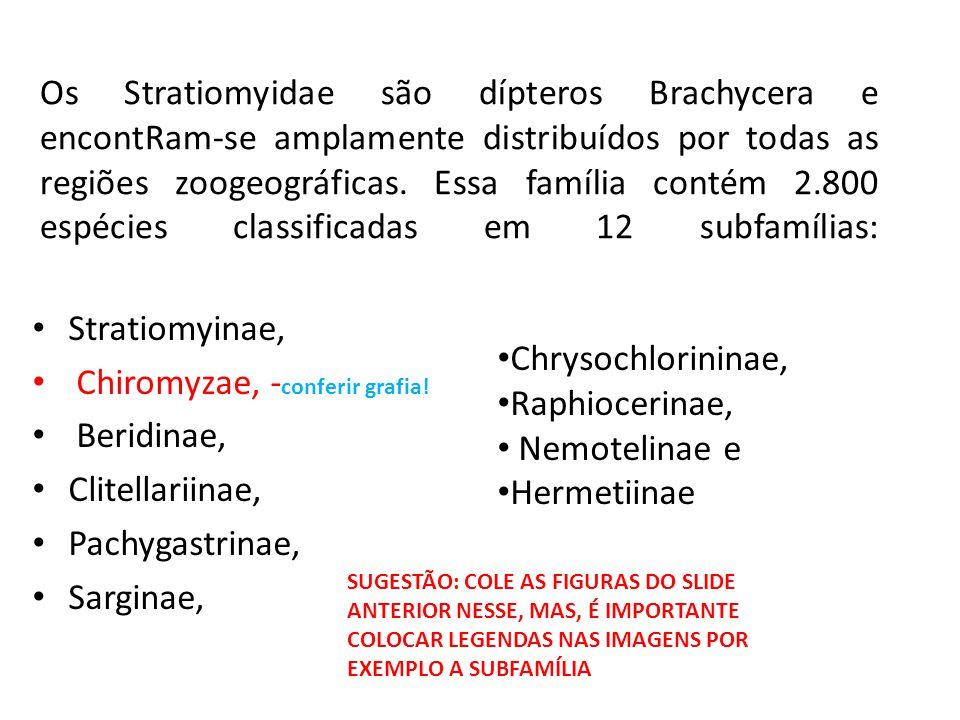 Chiromyzae, -conferir grafia! Beridinae, Clitellariinae,