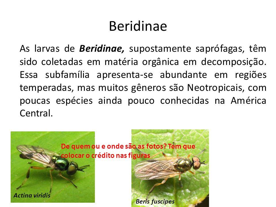 Beridinae