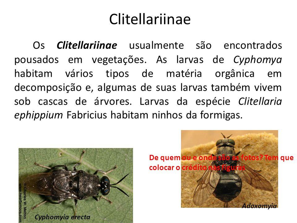 Clitellariinae
