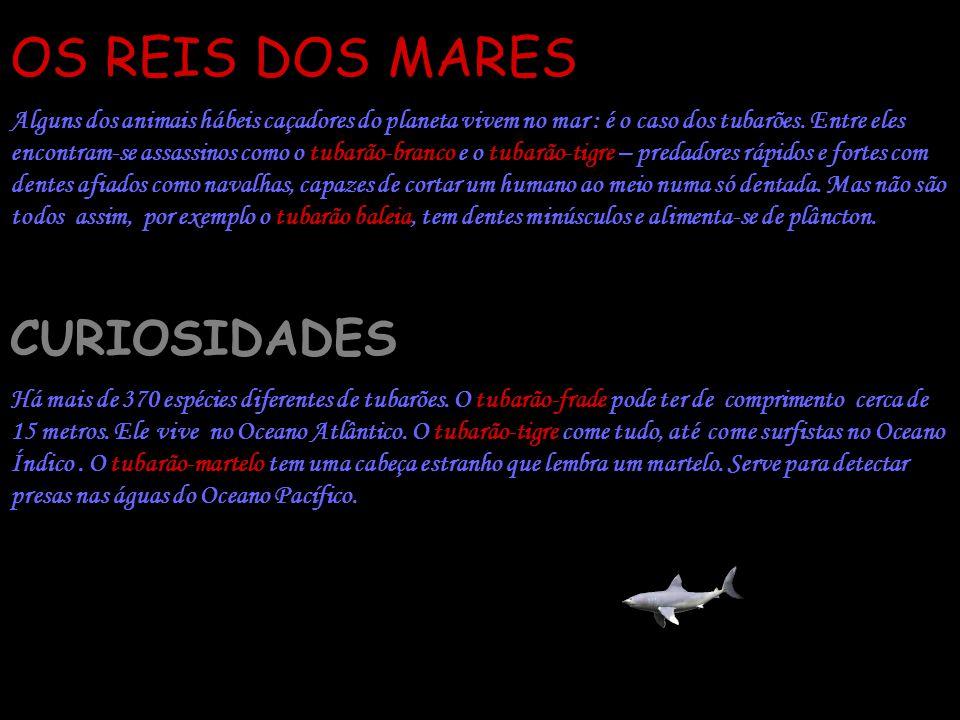 OS REIS DOS MARES CURIOSIDADES