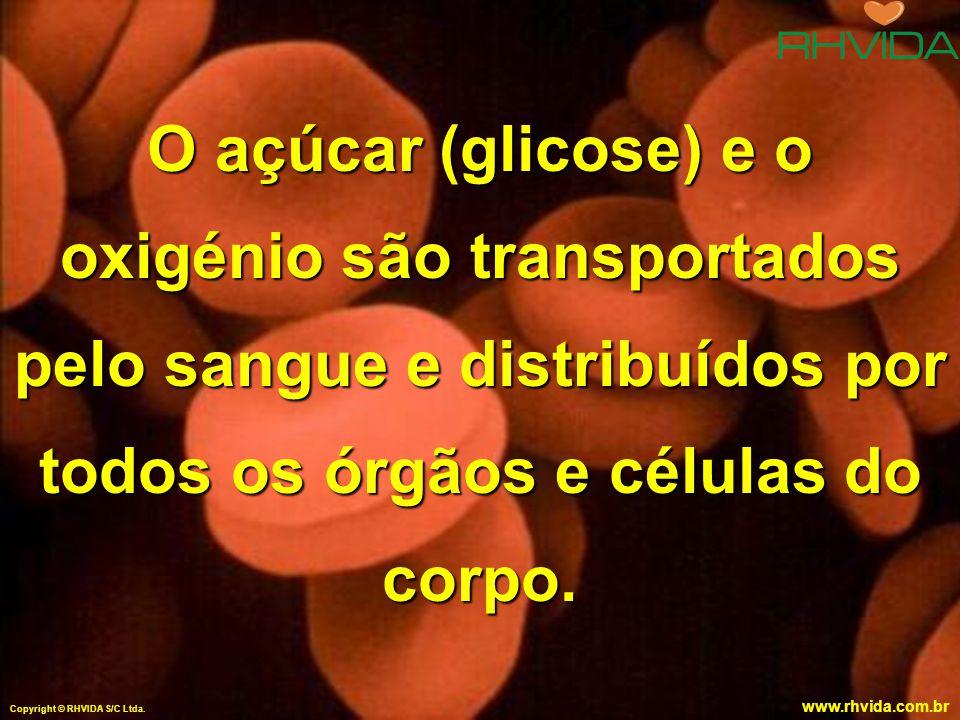 O açúcar (glicose) e o oxigénio são transportados pelo sangue e distribuídos por todos os órgãos e células do corpo.