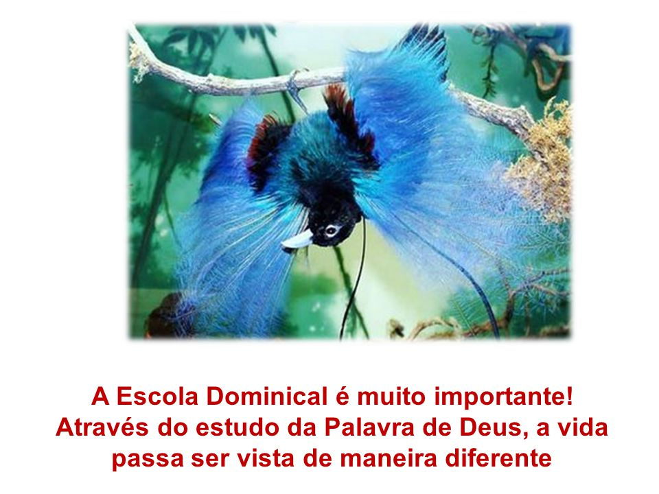 A Escola Dominical é muito importante