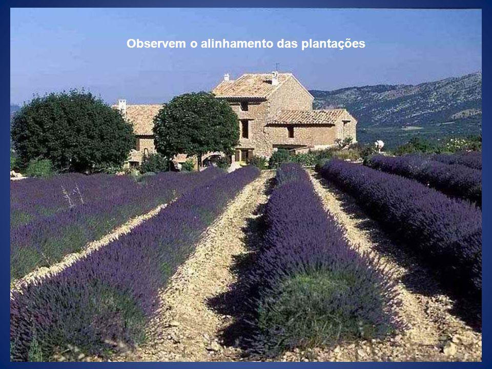 Observem o alinhamento das plantações