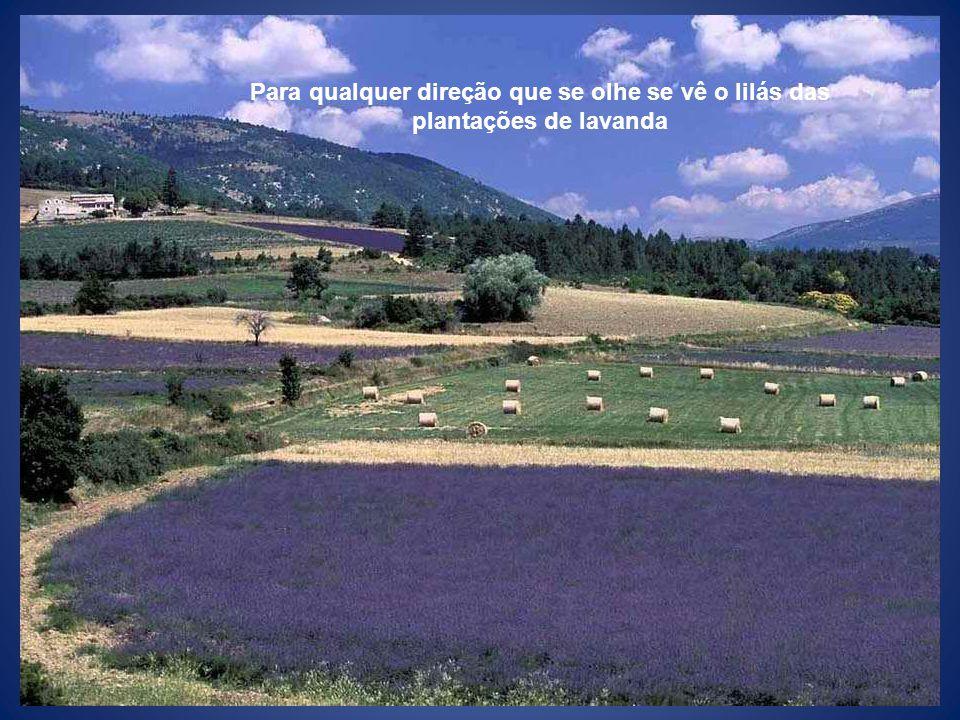 Para qualquer direção que se olhe se vê o lilás das plantações de lavanda