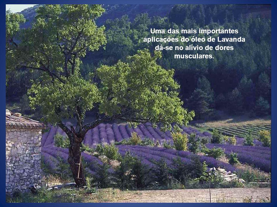 Uma das mais importantes aplicações do óleo de Lavanda dá-se no alívio de dores musculares.