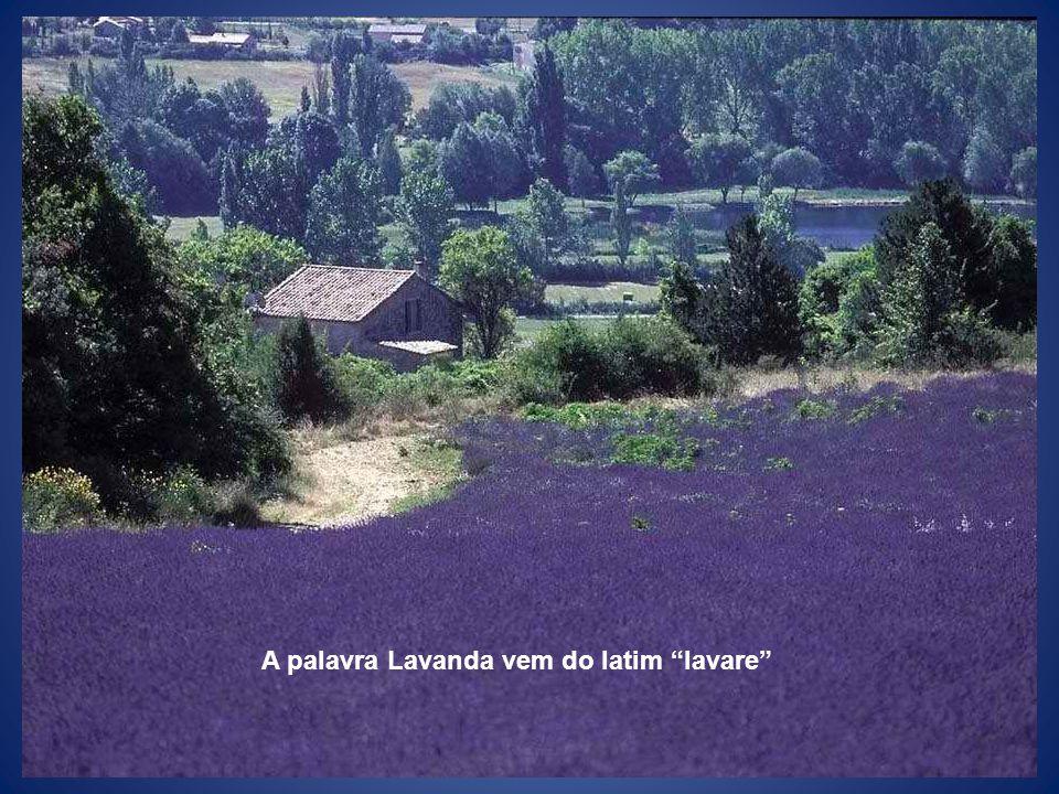 A palavra Lavanda vem do latim lavare