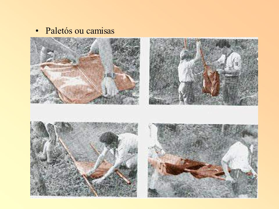 Paletós ou camisas