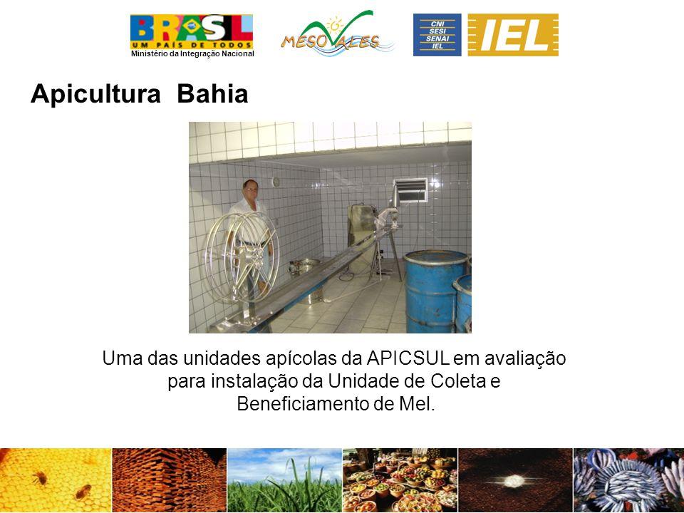 Apicultura Bahia Uma das unidades apícolas da APICSUL em avaliação