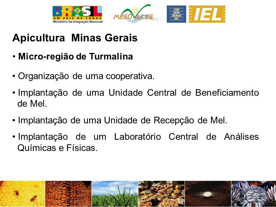 Apicultura Minas Gerais Micro-região de Turmalina