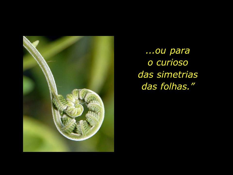 ...ou para o curioso das simetrias das folhas.