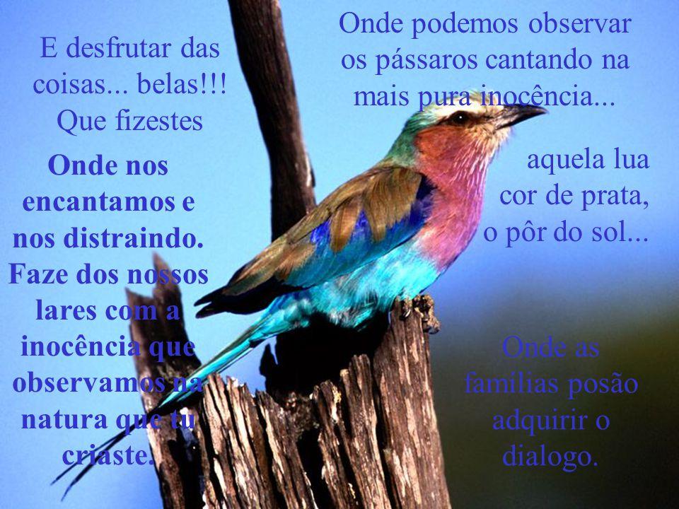 Onde podemos observar os pássaros cantando na mais pura inocência...