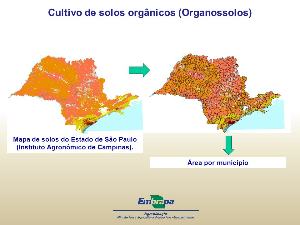 Cultivo de solos orgânicos (Organossolos)