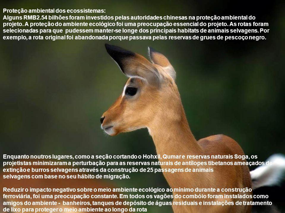 Proteção ambiental dos ecossistemas: