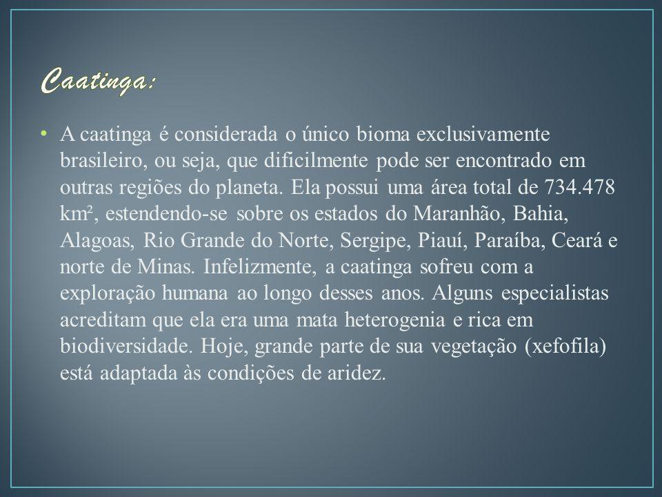 Caatinga: